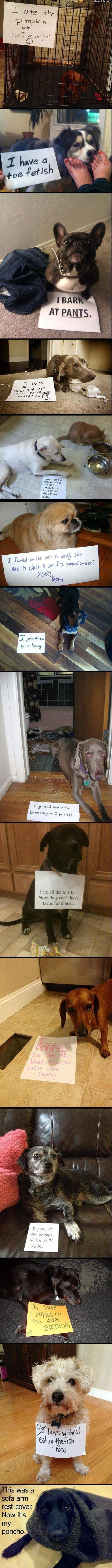 A bunch of dog shaming