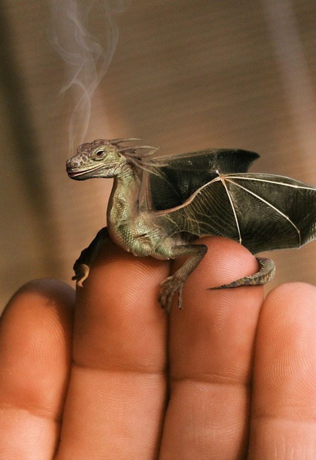 I really wish I had a mini dragon!