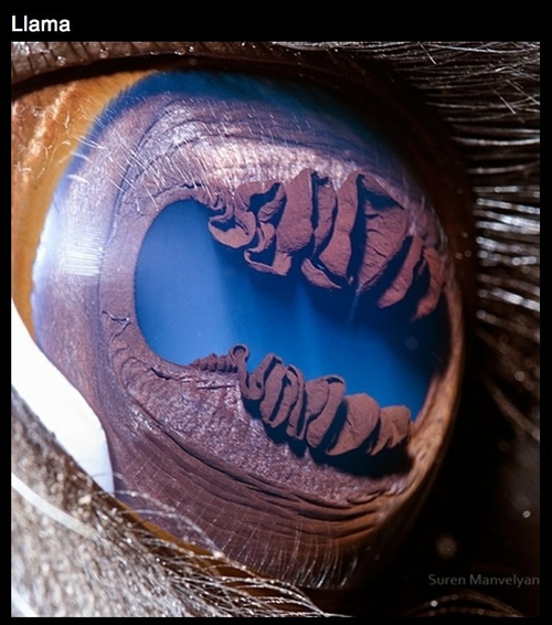 The Eyes of Nature-10