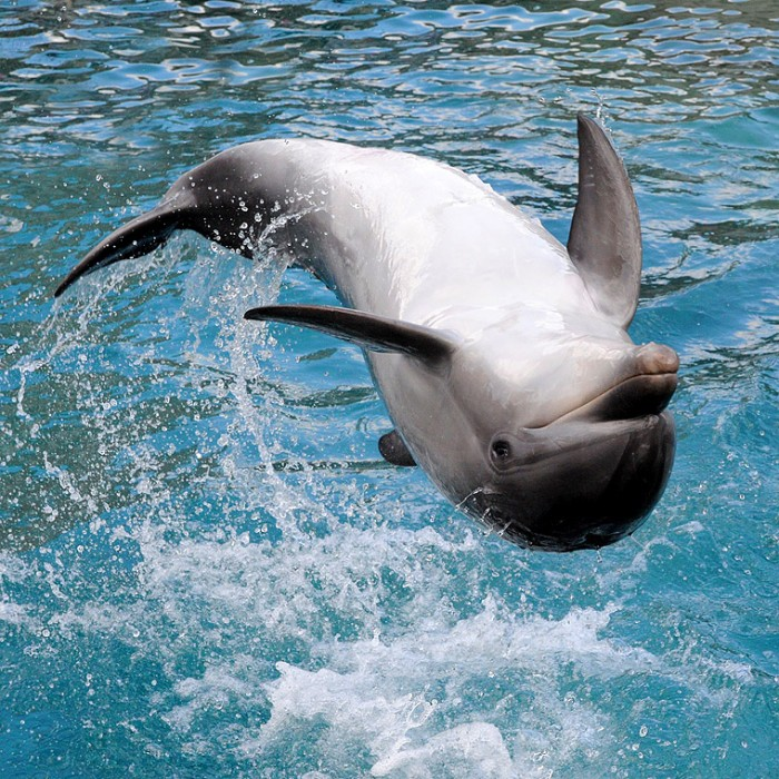 Upside Down Dolphin