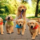 Taking the kids for a walk