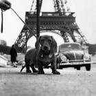 Hans Mauli, Dog in Paris, 1959-64.
