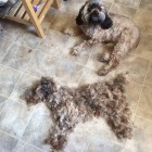 How to clone your dog