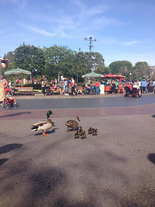 Just another family enjoying a magical day at Disneyland