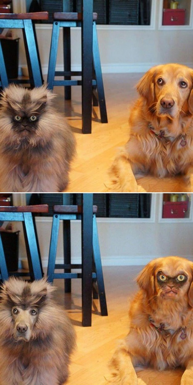 Totally-Insane-Face-Swaps-010