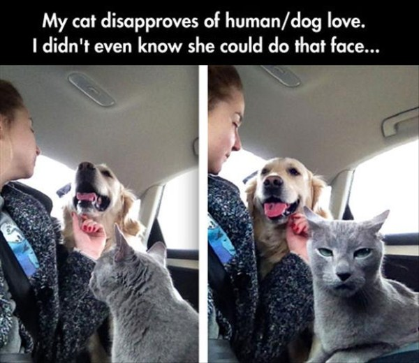 cat-does-not-like-human-dog-love
