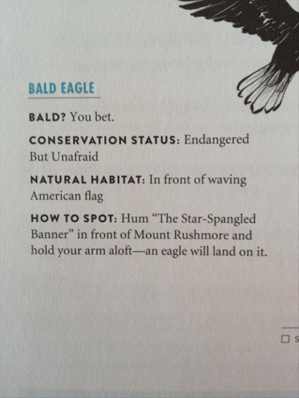 how-to-catch-an-eagle