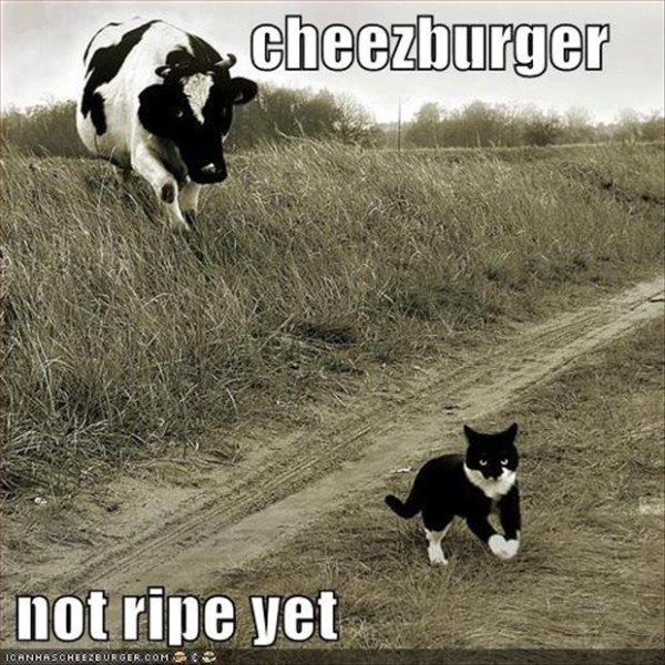 the-cat-wants-cheezeburgers
