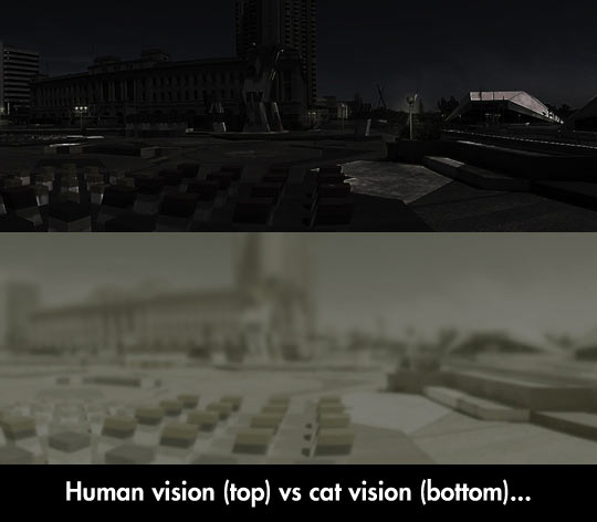 Differences Between Human And Cat Vision