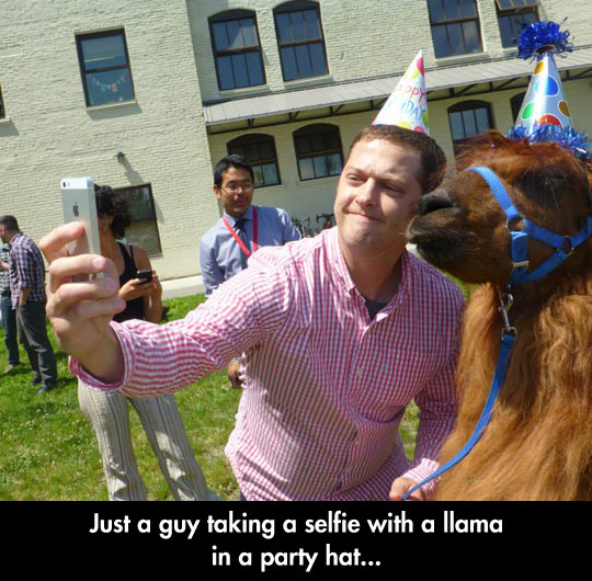 The Llama Was The Soul Of The Party