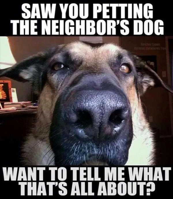 dog-catches-you-petting-the-neighbors-dog