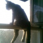 funny-cat-seated-window-thinking