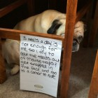 funny-sad-dog-hiding-treats-note