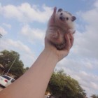 Hedgehog To The Sky