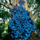 cool-blue-butterfly-tree-Brazil
