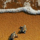cool-little-turtles-sea-sand