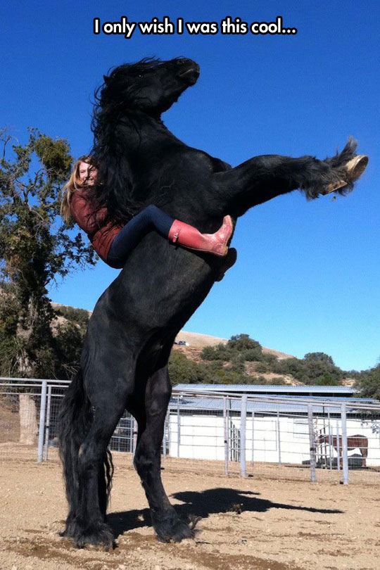 cool-riding-giant-horse-no-saddle