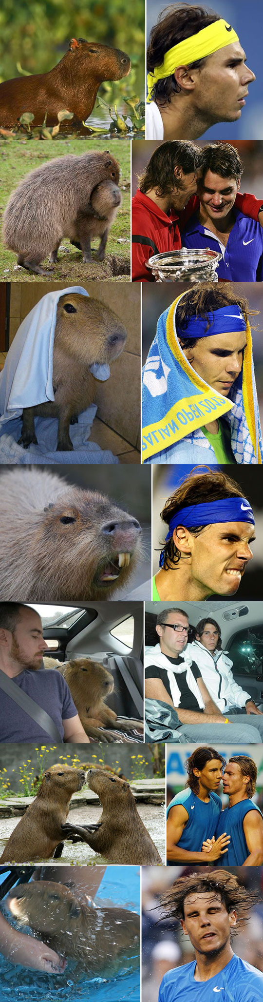 funny-Rafa-Nadal-tennis-player-animal