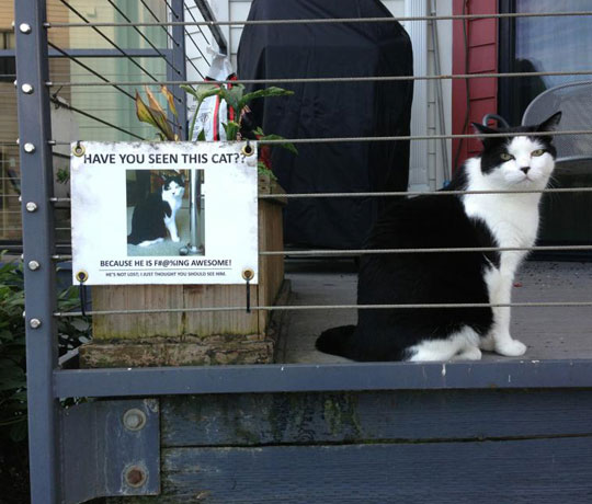 funny-cat-wanted-sign-awesome