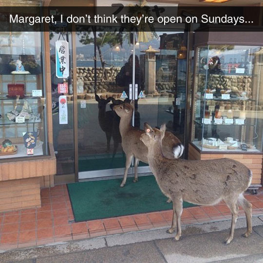 funny-deer-store-waiting-close