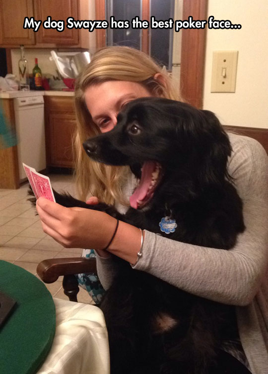 Playing Poker With My Dog
