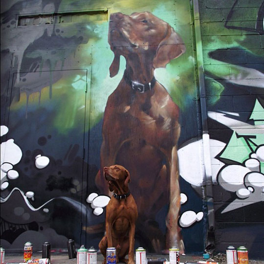 cool-dog-graffiti-painting-wall