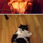 cute-cat-fat-laying-around