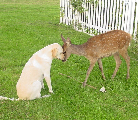 cute-dog-deer-bumping-heads