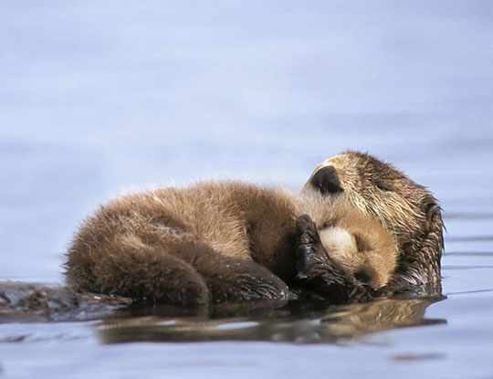 cute-lake-beaver-hug-baby