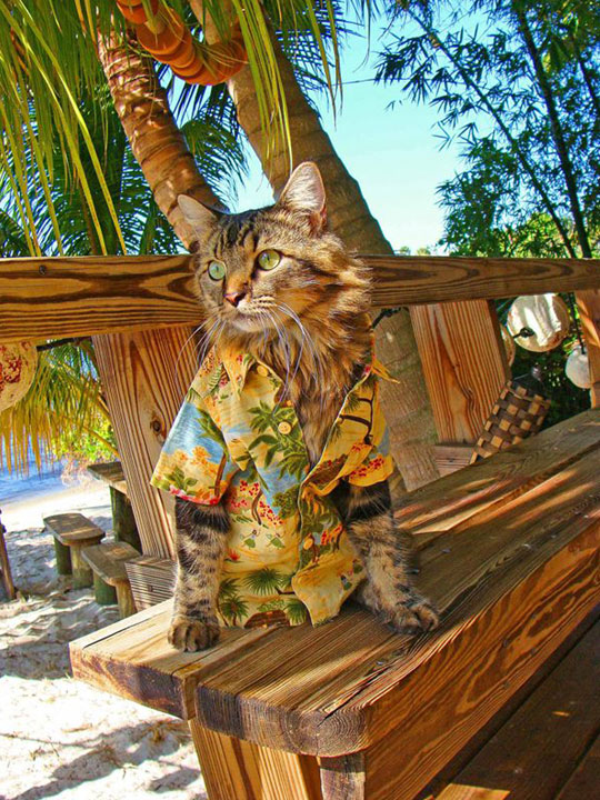 cute-tropical-cat-beach-shirt