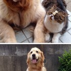 funny-Oliver-Dog-Arashi-Cat-best-friends