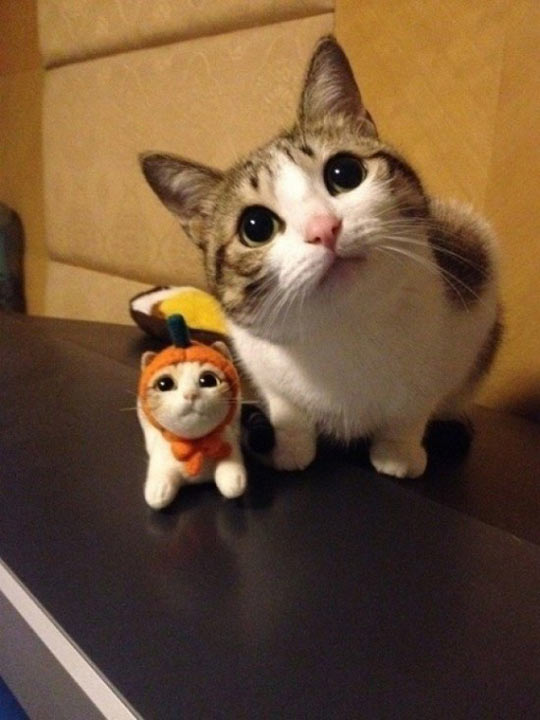 funny-cat-cute-pumpkin-toy