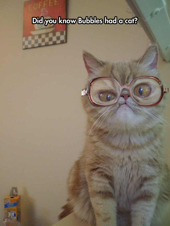 funny-cat-glasses-eyes-Bubbles