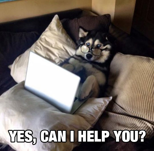 funny-dog-computer-lying-bed