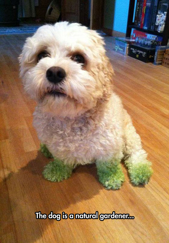 funny-dog-green-paws-grass