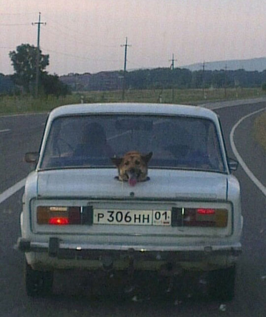 funny-dog-hole-trunk-car