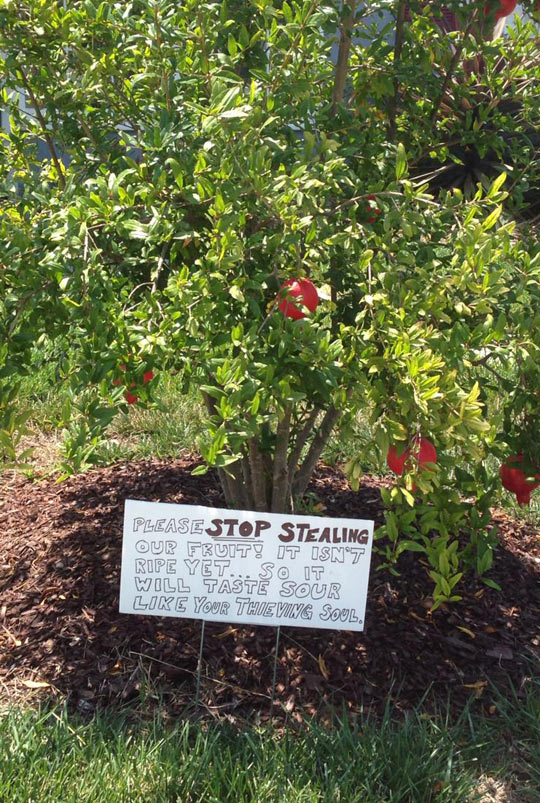 funny-fruit-tree-sign-apple