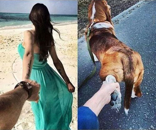 funny-girlfriend-dog-hold-hand