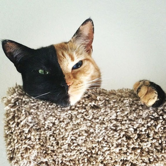two-faced-chimera-cat-venus-3