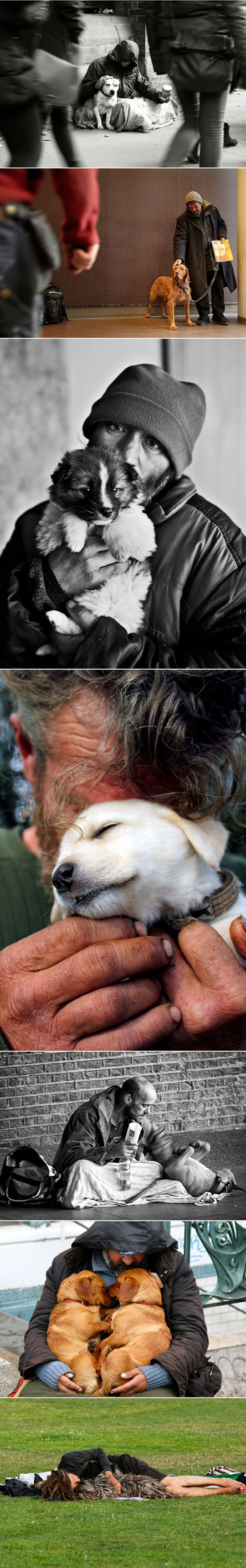 cool-pet-homeless-love-street