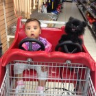 funny-car-baby-dog-store