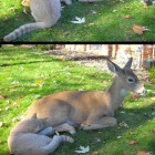 funny-deer-cat-friendship-visiting