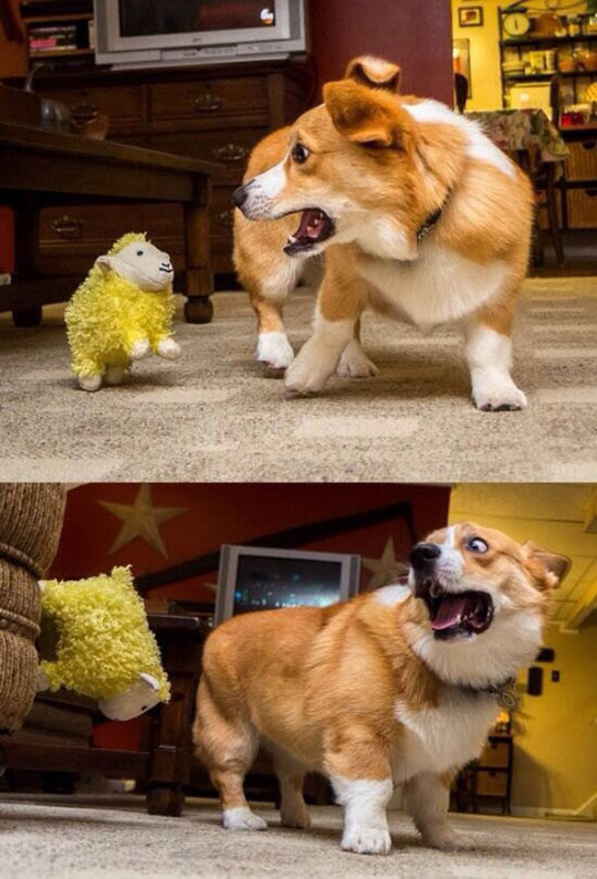 funny-dog-corgi-toy-sheep