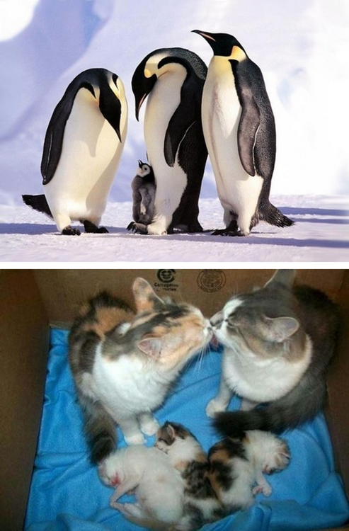 Adorable Animal Family Photos 05