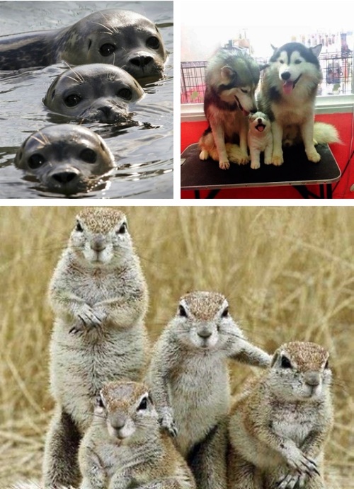 Adorable Animal Family Photos 06