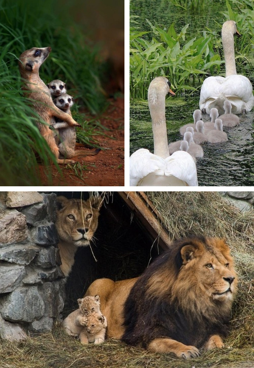 Adorable Animal Family Photos 07