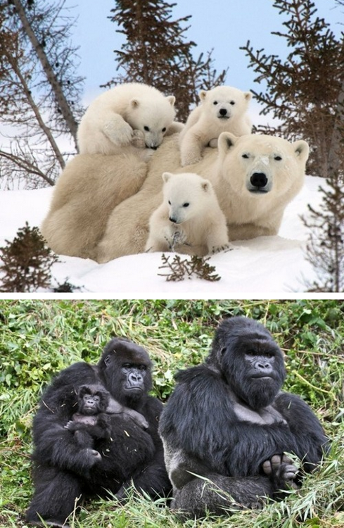 Adorable Animal Family Photos 08