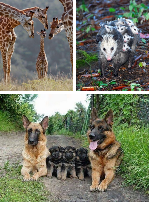 Adorable Animal Family Photos 09