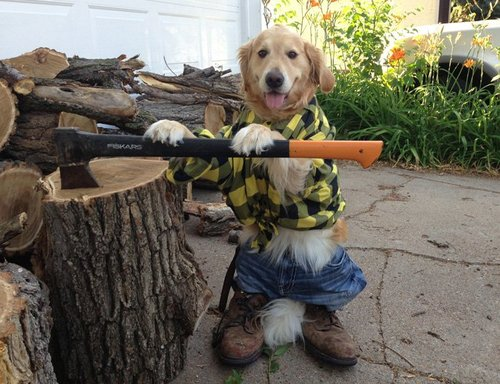 Bailey the Golden Retriever is the Cutest Dog on the Internet Right Now 07