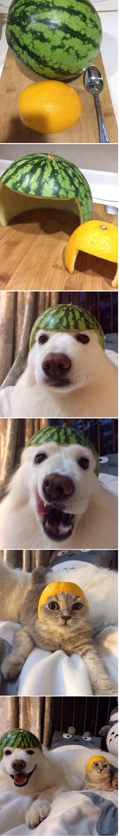 Melon collie and sour puss